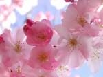 flores-de-bach-formula-astrologica_MLA-F-3333302128_102012